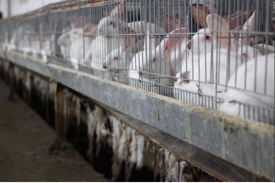 #Bonnenouvelle : Le Parlement européen se prononce pour la fin des lapins en cage ! Chaque année, 320 millions de lapins sont élevés pour leur viande sur le continent, et 99 % d'entre eux sont enfermés entre quatre barreaux.