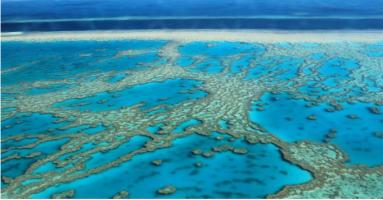 Planète : Des chercheurs de l'université James-Cook en Australie ont annoncé qu'à la suite d'un second épisode de blanchissement du au réchauffement des océans, les coraux touchés au sein de la Grande Barrière ne s'en remettront pas.