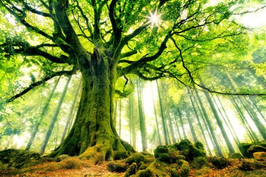 #Nature : Il existe 60.065 espèces d'arbres dans le monde ! Pour la première fois dans l'histoire, un projet scientifique a permis de recenser tous les arbres de la planète !